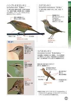 イナダヨシキリ 野鳥 - 図鑑.jp