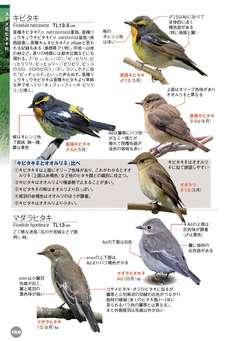マダラヒタキ 野鳥 - 図鑑.jp