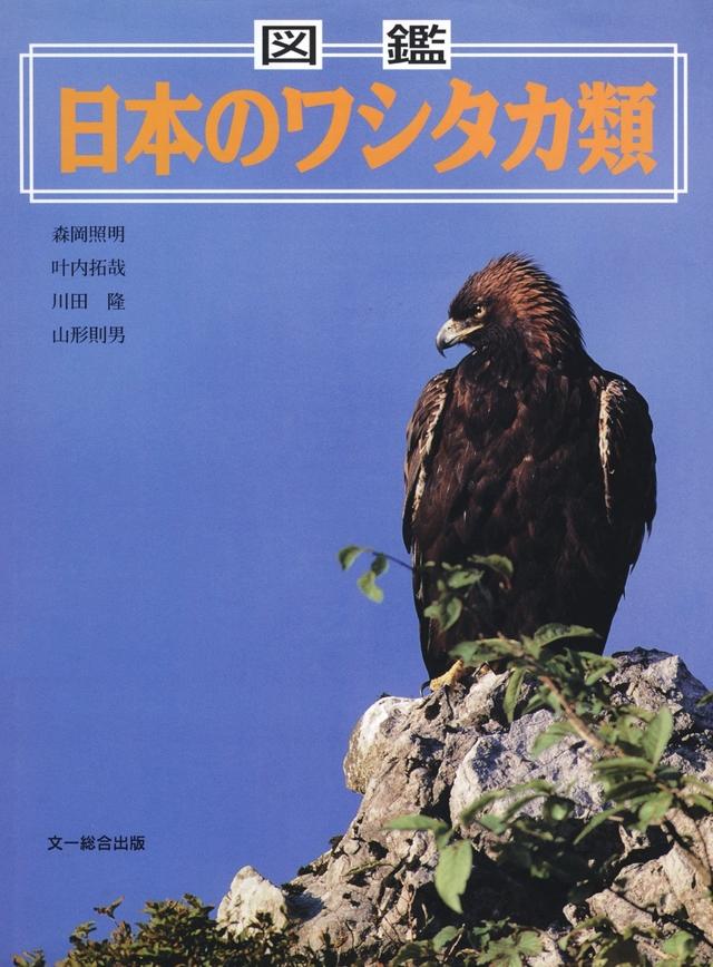 図鑑 日本のワシタカ類